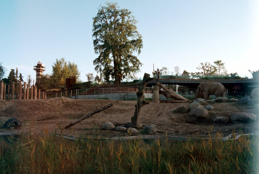 Frederiksberg Have Zoo Elephants Gardens Slot Baroque Palace København Copenhagen Copenhej