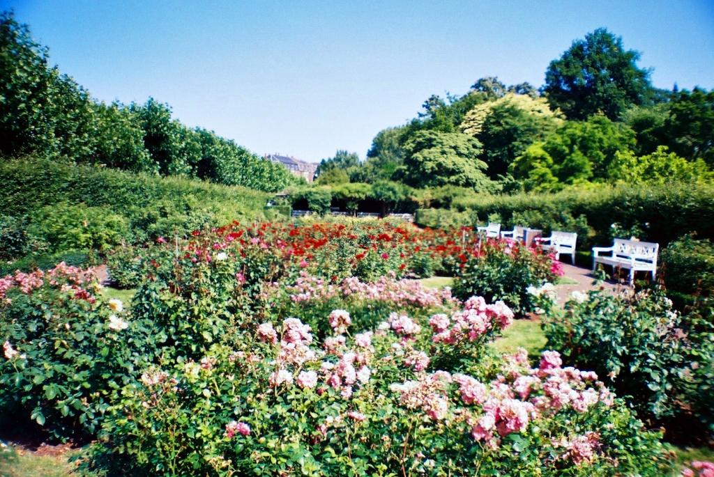 Landbohøjskolens Have Rose Garden Rosenhaven Frederiksberg København Copenhagen Copenhej